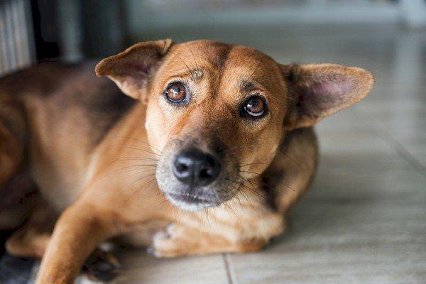 Cachorro é flagrado carregando um pé humano no interior do RN